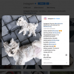 10 Hashtags To Use And Get Noticed On Instagram